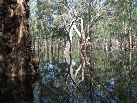 Poochers Swamp